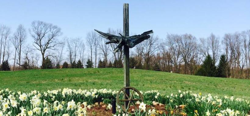 Daffodils in GilChrist public retreat center garden