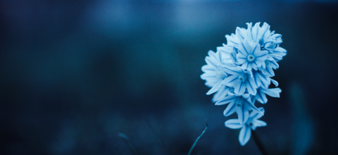 Blue flower with blurred background