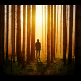 Silhouette of man in forest at sunset