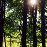 green forest with bright sun