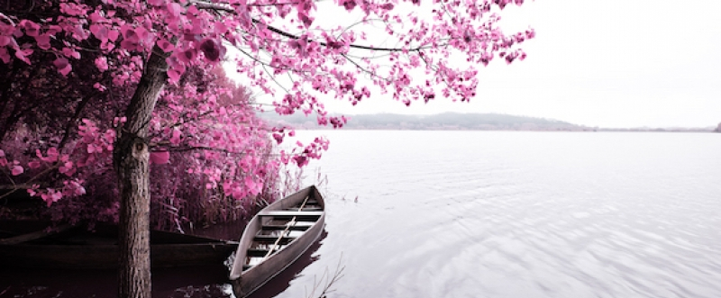 Boat under blossoming tree on lake shore