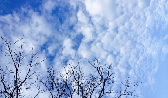 bare tree branches against a cloudy blue sky