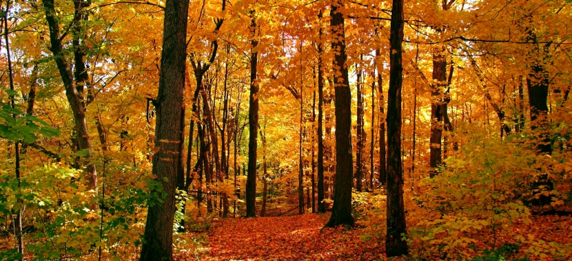 Autumn trees with orange and gold leaves