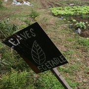 "garden sign reading ""leaves, vegetable"" with leaf drawing in center"