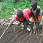 two young boys hoe soil in Africa