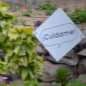 "card with ""ciudame"" written on it in a sound bubble against a garden wall"